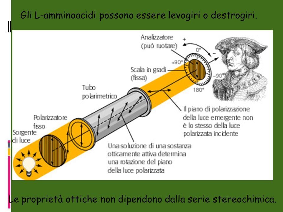 Gli L-amminoacidi possono essere levogiri o destrogiri. Le proprietà ottiche non dipendono dalla serie stereochimica.