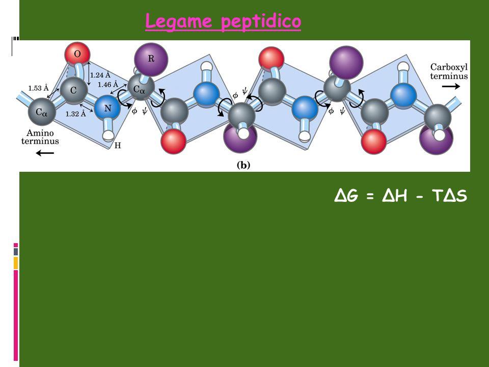 ΔG = ΔH - TΔS Legame peptidico