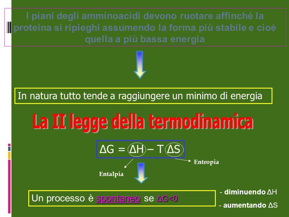 I piani degli amminoacidi devono ruotare affinché la proteina si ripieghi assumendo la forma più stabile e cioè quella a più bassa energia In natura t