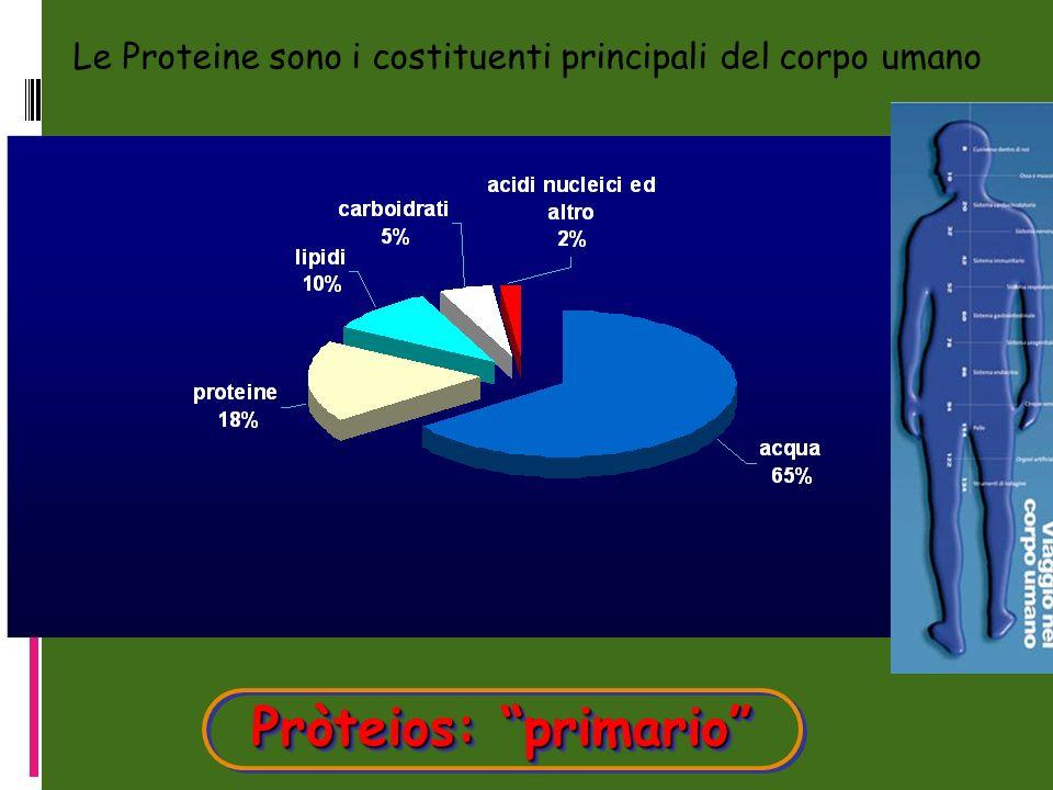 Pròteios: primario Pròteios: primario Le Proteine sono i costituenti principali del corpo umano