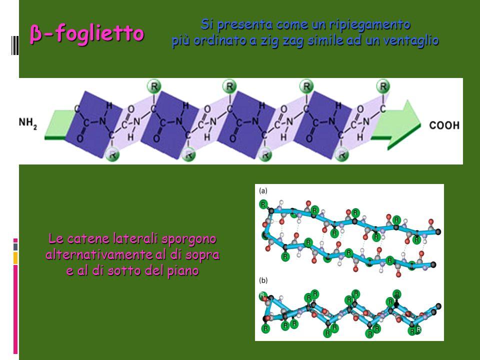 Si presenta come un ripiegamento più ordinato a zig zag simile ad un ventaglio β-foglietto Le catene laterali sporgono alternativamente al di sopra e