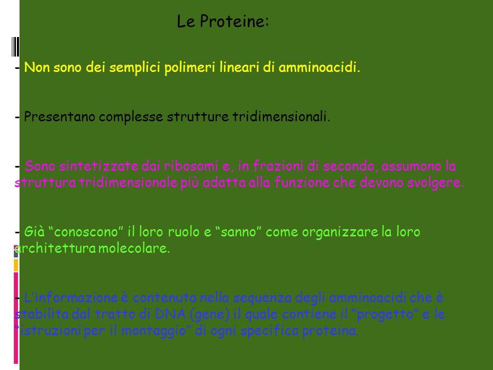 - Non sono dei semplici polimeri lineari di amminoacidi. - Presentano complesse strutture tridimensionali. - Sono sintetizzate dai ribosomi e, in fraz