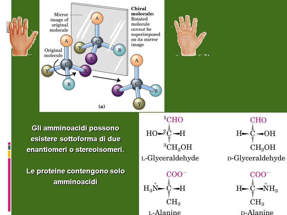 Gli amminoacidi possono esistere sottoforma di due enantiomeri o stereoisomeri. Le proteine contengono solo amminoacidi