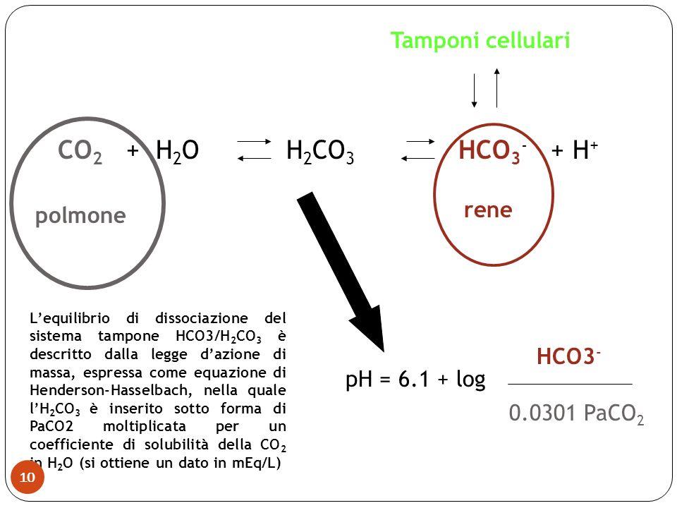 CO 2 + H 2 O H 2 CO 3 HCO 3 - + H + polmone rene pH = 6.1 + log HCO3 - 0.0301 PaCO 2 Lequilibrio di dissociazione del sistema tampone HCO3/H 2 CO 3 è