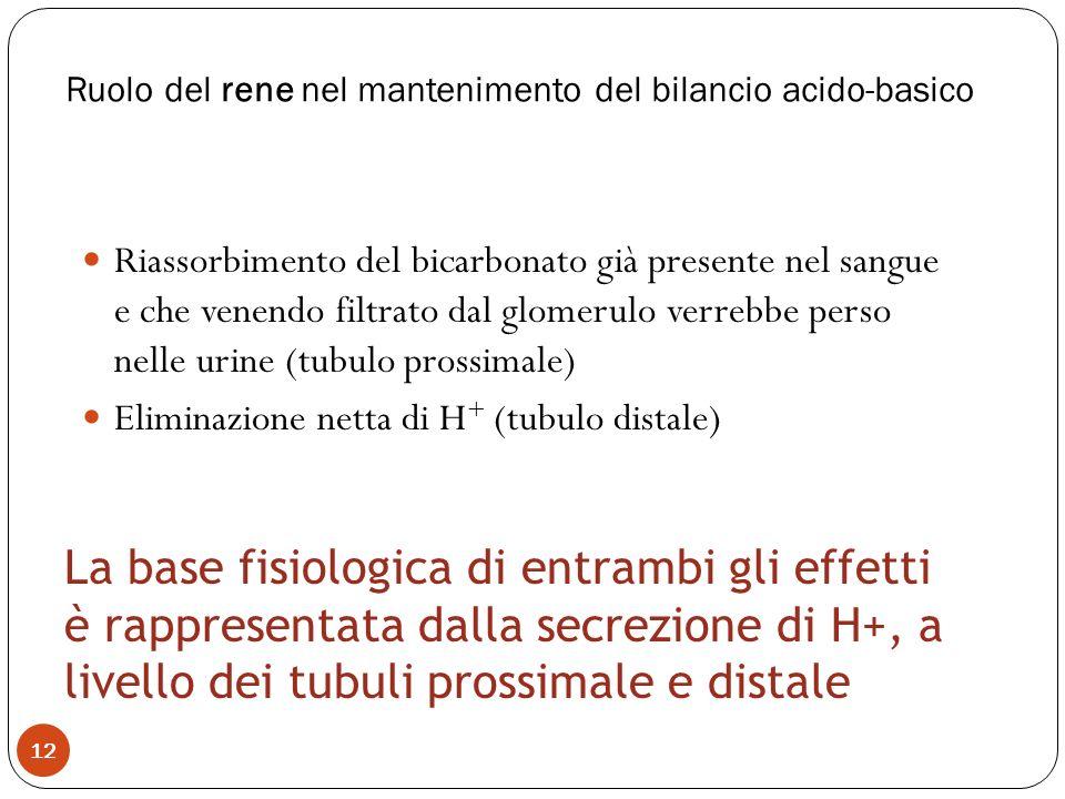 Ruolo del rene nel mantenimento del bilancio acido-basico 12 Riassorbimento del bicarbonato già presente nel sangue e che venendo filtrato dal glomeru