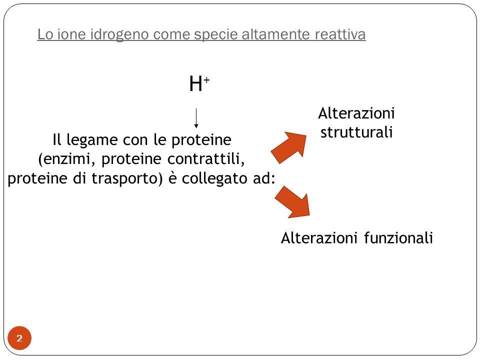 2 Lo ione idrogeno come specie altamente reattiva H+H+ Il legame con le proteine (enzimi, proteine contrattili, proteine di trasporto) è collegato ad: