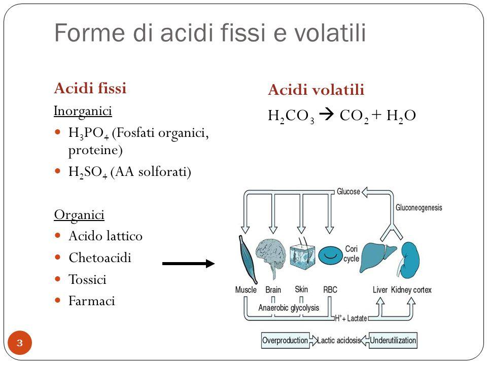 Forme di acidi fissi e volatili 3 Acidi fissi Inorganici H 3 PO 4 (Fosfati organici, proteine) H 2 SO 4 (AA solforati) Organici Acido lattico Chetoaci