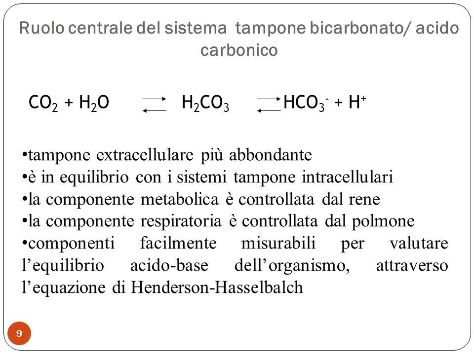 CO 2 + H 2 O H 2 CO 3 HCO 3 - + H + tampone extracellulare più abbondante è in equilibrio con i sistemi tampone intracellulari la componente metabolic