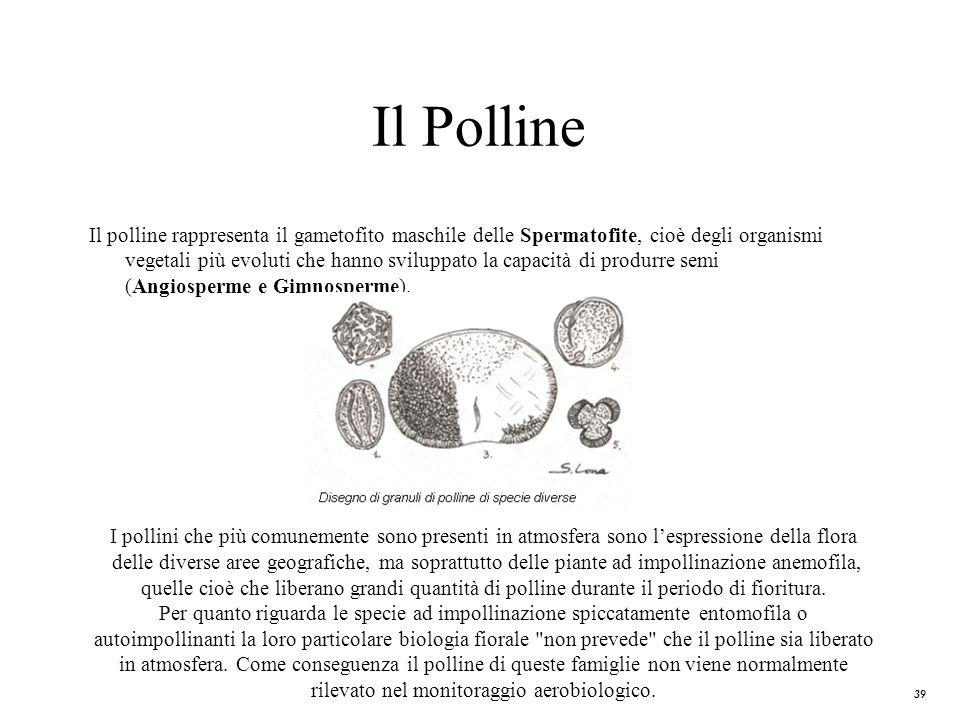 39 Il Polline Il polline rappresenta il gametofito maschile delle Spermatofite, cioè degli organismi vegetali più evoluti che hanno sviluppato la capa