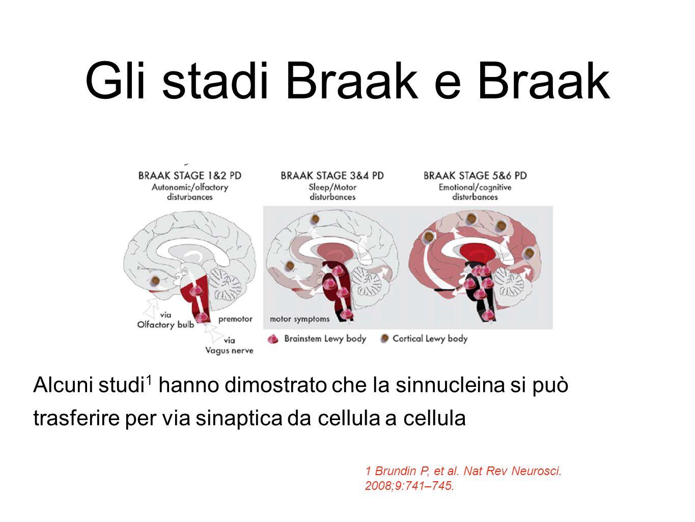 Gli stadi Braak e Braak Alcuni studi 1 hanno dimostrato che la sinnucleina si può trasferire per via sinaptica da cellula a cellula 1 Brundin P, et al