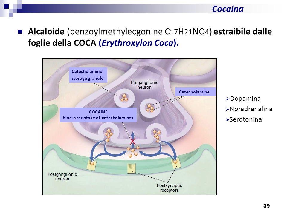 Cocaina Dopamina Noradrenalina Serotonina Catecholamine storage granule Catecholamine COCAINE blocks reuptake of catecholamines 39 Alcaloide (benzoylm