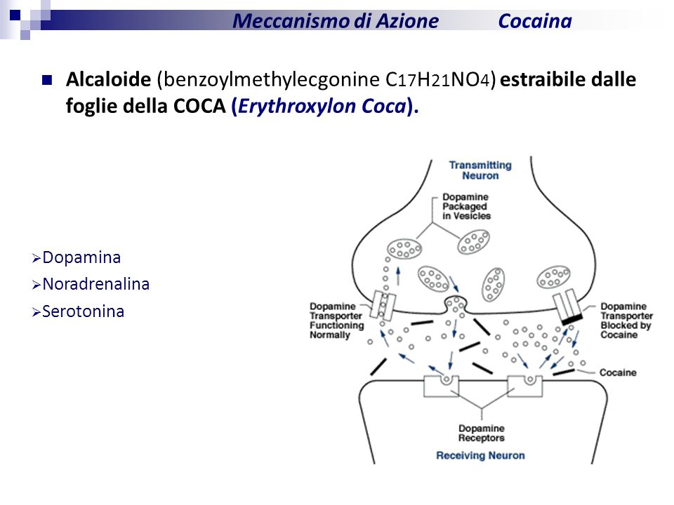 Dopamina Noradrenalina Serotonina Cocaina Alcaloide (benzoylmethylecgonine C 17 H 21 NO 4 ) estraibile dalle foglie della COCA (Erythroxylon Coca). Me