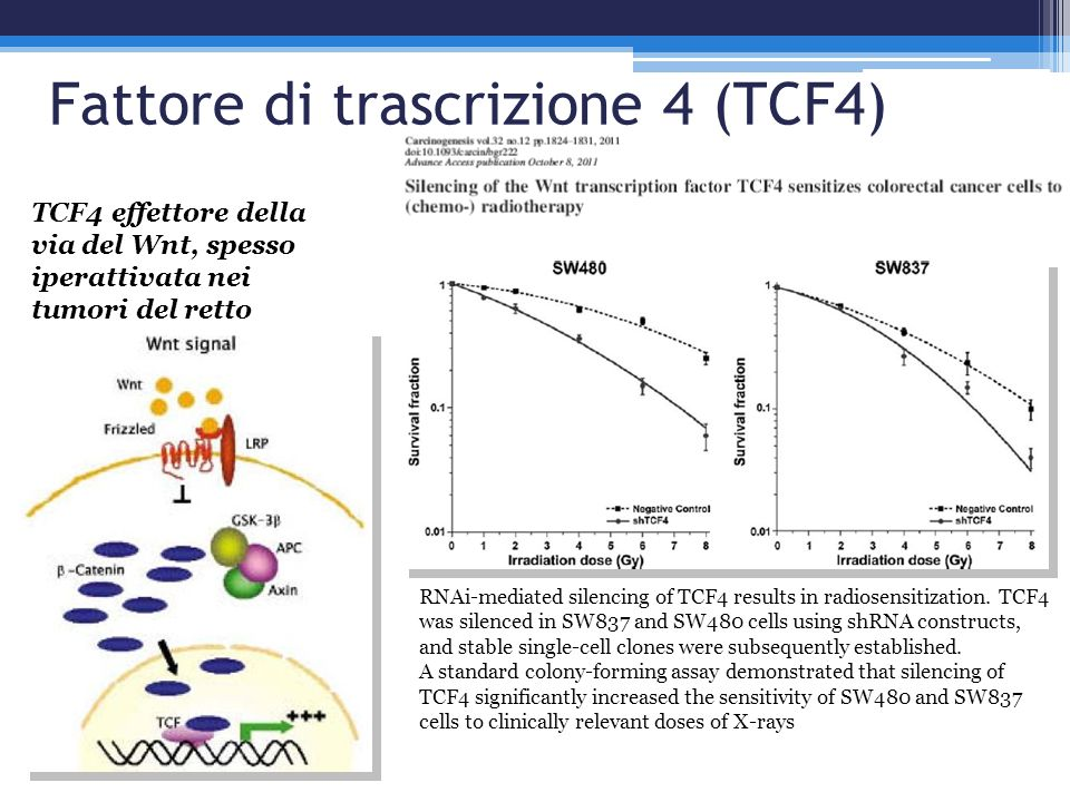 RNAi-mediated silencing of TCF4 results in radiosensitization. TCF4 was silenced in SW837 and SW480 cells using shRNA constructs, and stable single-ce