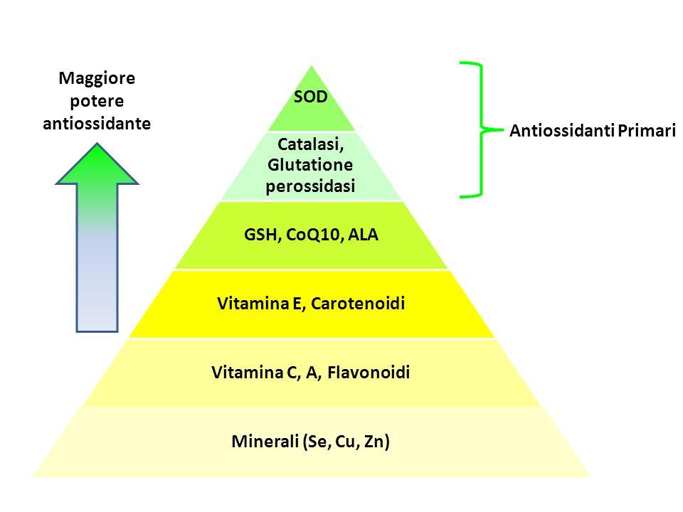 SOD Catalasi, Glutatione perossidasi GSH, CoQ10, ALA Vitamina E, Carotenoidi Vitamina C, A, Flavonoidi Minerali (Se, Cu, Zn) Maggiore potere antiossidante Antiossidanti Primari