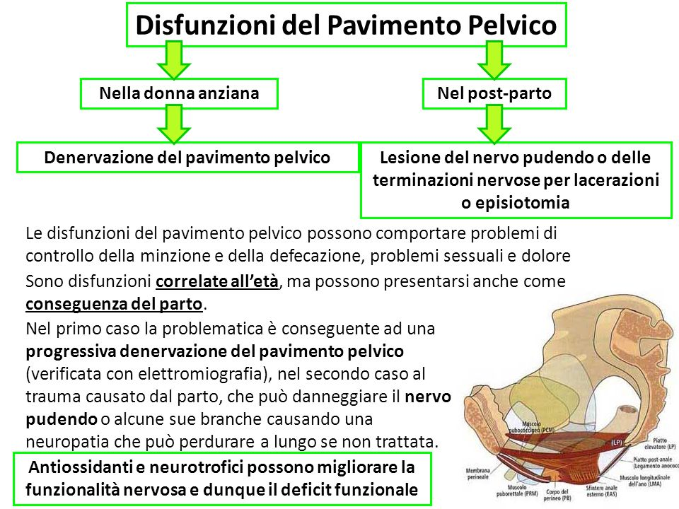 Disfunzioni del Pavimento Pelvico Le disfunzioni del pavimento pelvico possono comportare problemi di controllo della minzione e della defecazione, problemi sessuali e dolore Nella donna anzianaNel post-parto Denervazione del pavimento pelvicoLesione del nervo pudendo o delle terminazioni nervose per lacerazioni o episiotomia Antiossidanti e neurotrofici possono migliorare la funzionalità nervosa e dunque il deficit funzionale Sono disfunzioni correlate alletà, ma possono presentarsi anche come conseguenza del parto.