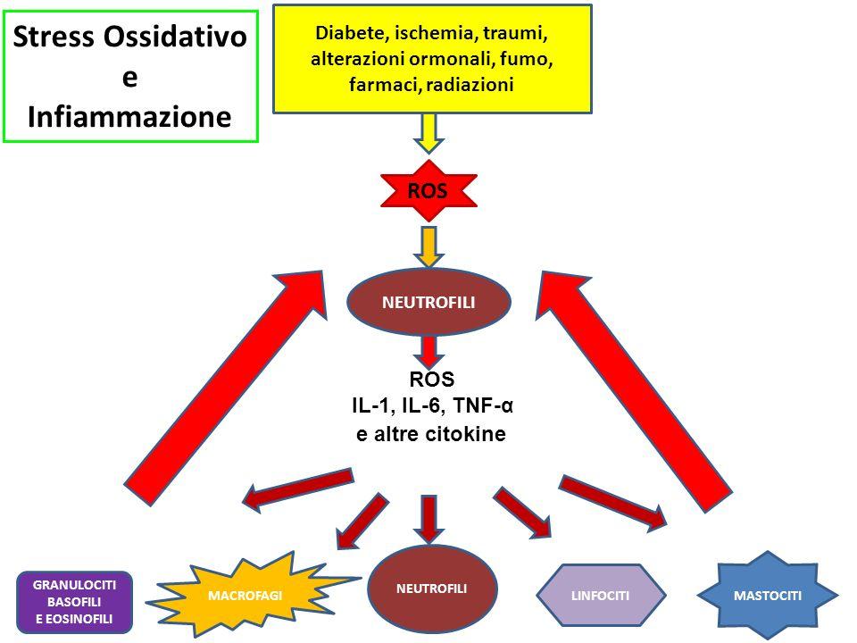 Diabete, ischemia, traumi, alterazioni ormonali, fumo, farmaci, radiazioni NEUTROFILI ROS IL-1, IL-6, TNF-α MACROFAGI LINFOCITI MASTOCITI GRANULOCITI BASOFILI E EOSINOFILI e altre citokine ROS Stress Ossidativo e Infiammazione