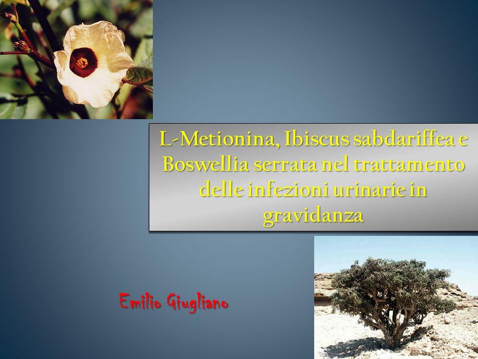L-Metionina, Ibiscus sabdariffea e Boswellia serrata nel trattamento delle infezioni urinarie in gravidanza Emilio Giugliano