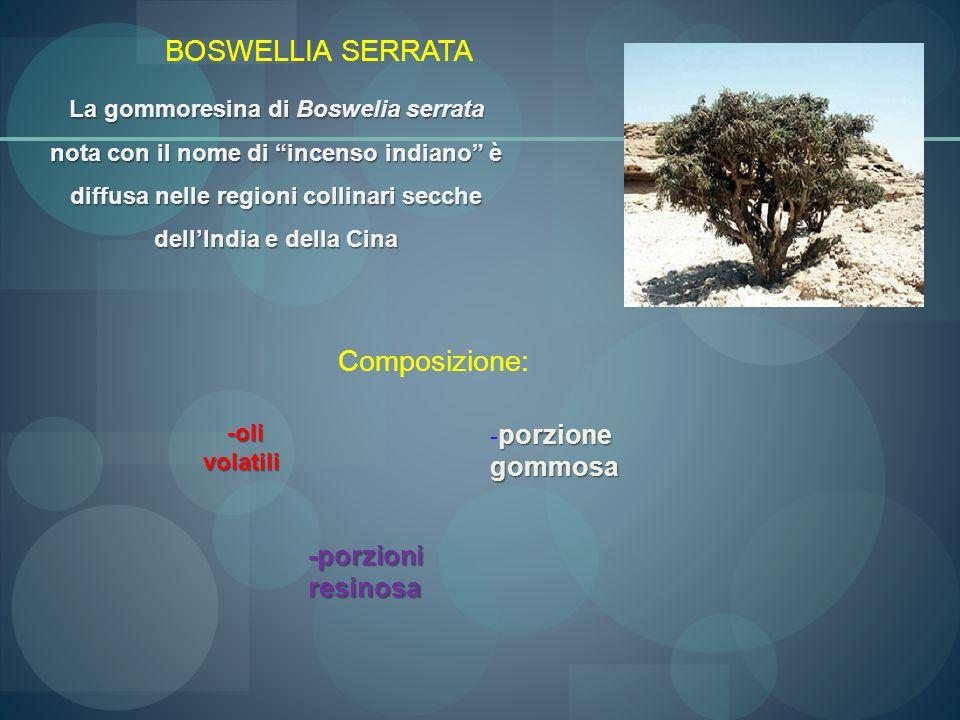 BOSWELLIA SERRATA La gommoresina di Boswelia serrata nota con il nome di incenso indiano è diffusa nelle regioni collinari secche dellIndia e della Ci