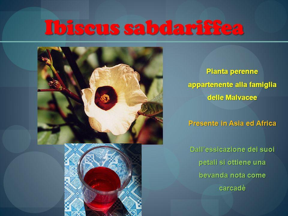 Ibiscus sabdariffea Pianta perenne appartenente alla famiglia delle Malvacee Presente in Asia ed Africa Dallessicazione dei suoi petali si ottiene una