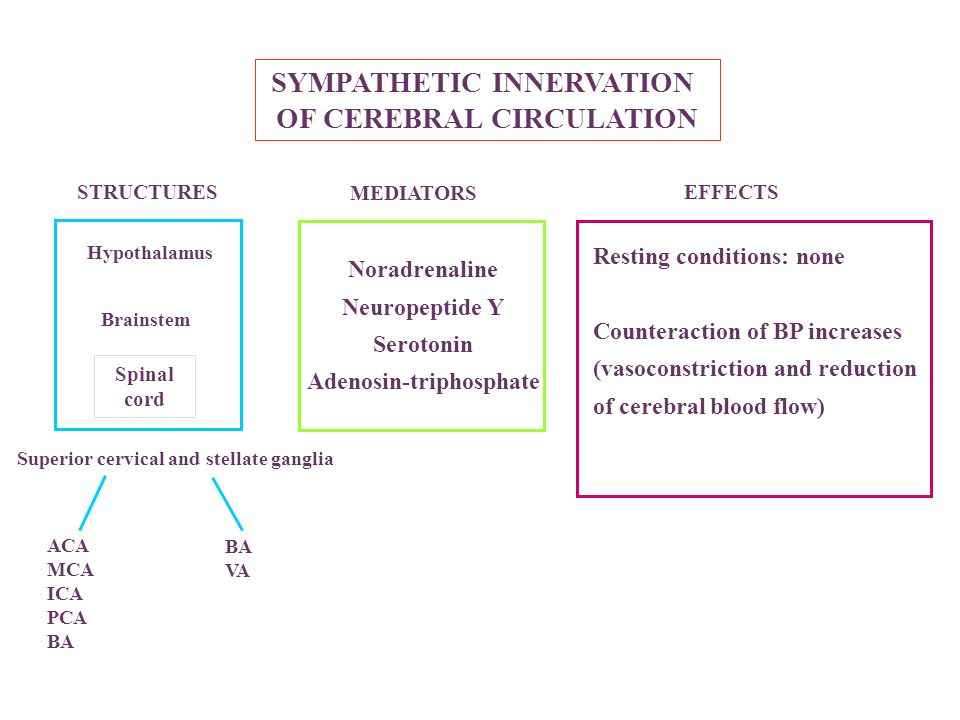 SYMPATHETIC INNERVATION OF CEREBRAL CIRCULATION Hypothalamus Brainstem Superior cervical and stellate ganglia Spinal cord ACA MCA ICA PCA BA VA Noradr