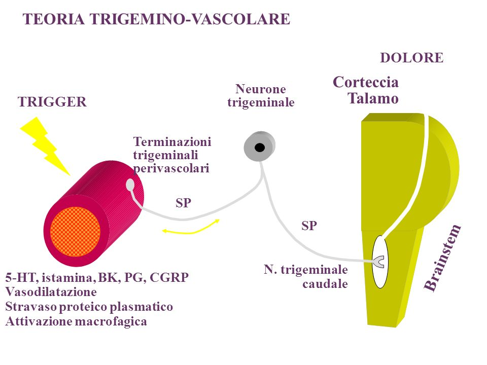 5-HT, istamina, BK, PG, CGRP Vasodilatazione Stravaso proteico plasmatico Attivazione macrofagica N. trigeminale caudale DOLORE Corteccia Talamo TRIGG