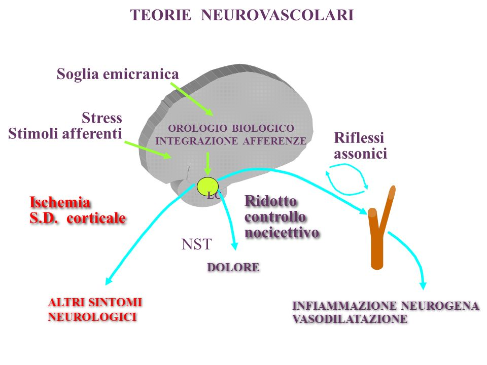 OROLOGIO BIOLOGICO INTEGRAZIONE AFFERENZE Stress Stimoli afferenti Soglia emicranica Ischemia S.D. corticale Ischemia S.D. corticale Riflessi assonici