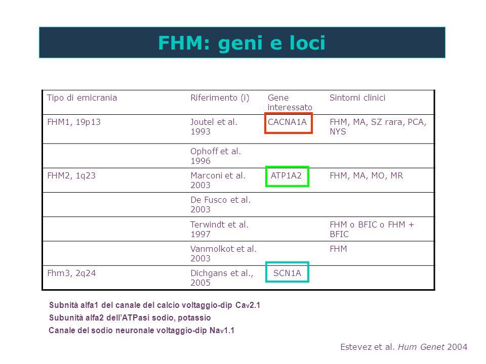 FHM: geni e loci Estevez et al. Hum Genet 2004 Tipo di emicraniaRiferimento (i)Gene interessato Sintomi clinici FHM1, 19p13Joutel et al. 1993 CACNA1AF