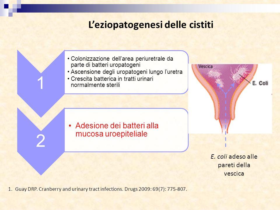 Leziopatogenesi delle cistiti 1 Colonizzazione dellarea periuretrale da parte di batteri uropatogeni Ascensione degli uropatogeni lungo luretra Cresci