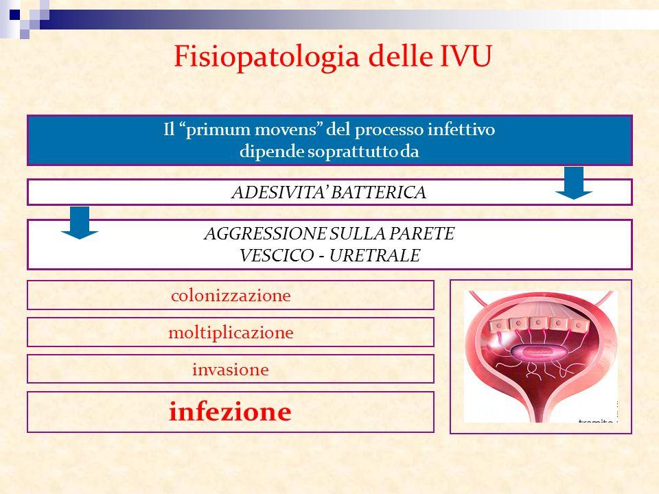 Fisiopatologia delle IVU Il primum movens del processo infettivo dipende soprattutto da ADESIVITA BATTERICA AGGRESSIONE SULLA PARETE VESCICO - URETRAL