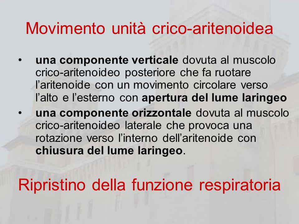 Movimento unità crico-aritenoidea una componente verticale dovuta al muscolo crico-aritenoideo posteriore che fa ruotare laritenoide con un movimento
