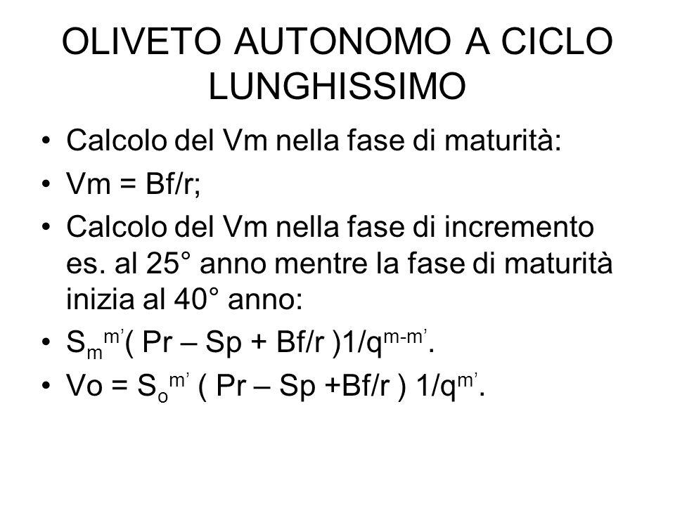 OLIVETO AUTONOMO A CICLO LUNGHISSIMO Calcolo del Vm nella fase di maturità: Vm = Bf/r; Calcolo del Vm nella fase di incremento es. al 25° anno mentre