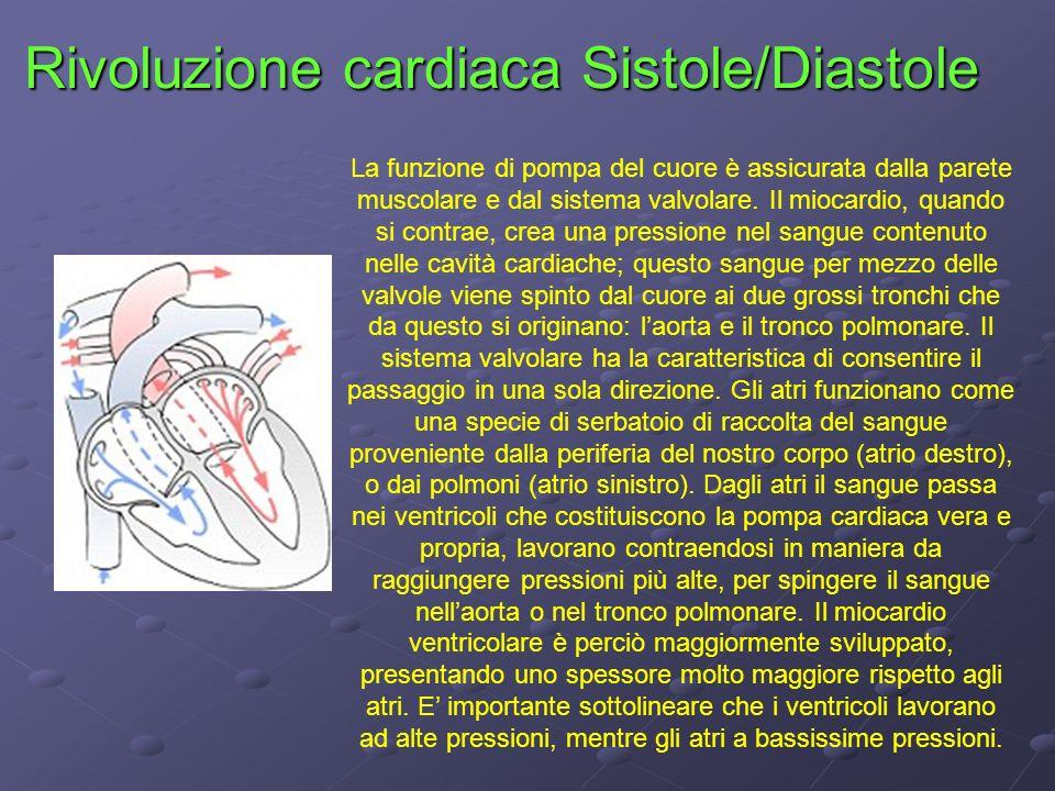 Rivoluzione cardiaca Sistole/Diastole La funzione di pompa del cuore è assicurata dalla parete muscolare e dal sistema valvolare. Il miocardio, quando