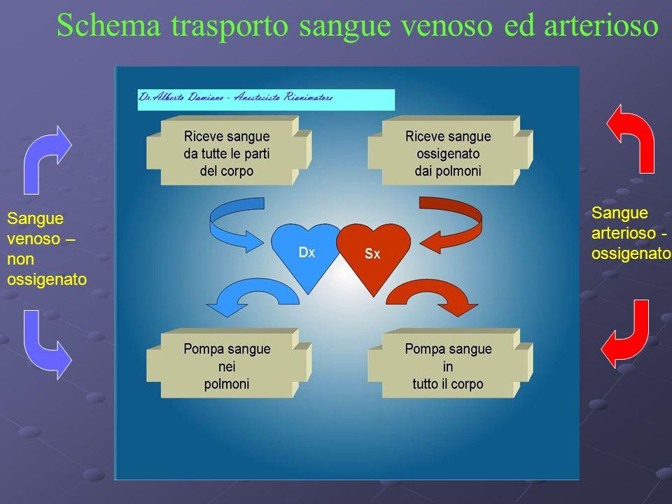 Schema trasporto sangue venoso ed arterioso Sangue venoso – non ossigenato Sangue arterioso - ossigenato
