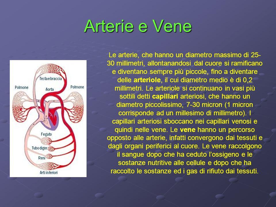 Arterie e Vene Le arterie, che hanno un diametro massimo di 25- 30 millimetri, allontanandosi dal cuore si ramificano e diventano sempre più piccole,