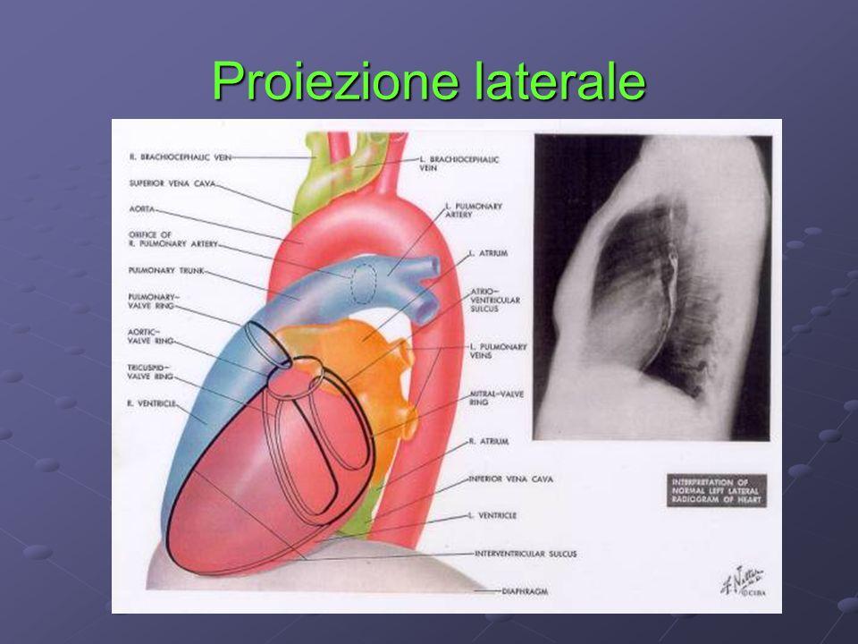 Pressione Arteriosa La pressione arteriosa è la forza esercitata dal sangue sulle pareti delle arterie.