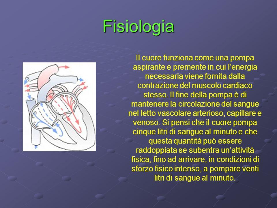 Rivoluzione cardiaca Sistole/Diastole La funzione di pompa del cuore è assicurata dalla parete muscolare e dal sistema valvolare.