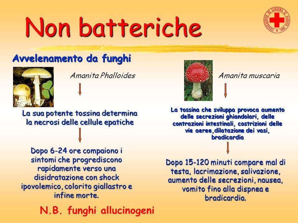 Non batteriche Non batteriche Avvelenamento da funghi Amanita PhalloidesAmanita muscaria La sua potente tossina determina la necrosi delle cellule epa