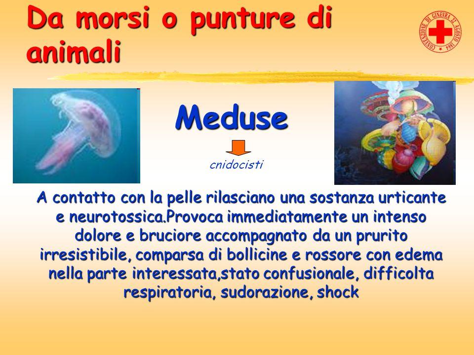 Da morsi o punture di animali Meduse cnidocisti A contatto con la pelle rilasciano una sostanza urticante e neurotossica.Provoca immediatamente un int