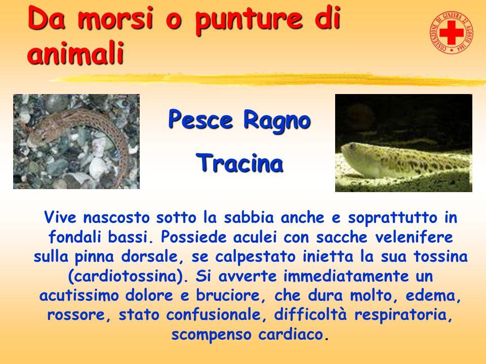 Da morsi o punture di animali Pesce Ragno Tracina Vive nascosto sotto la sabbia anche e soprattutto in fondali bassi. Possiede aculei con sacche velen