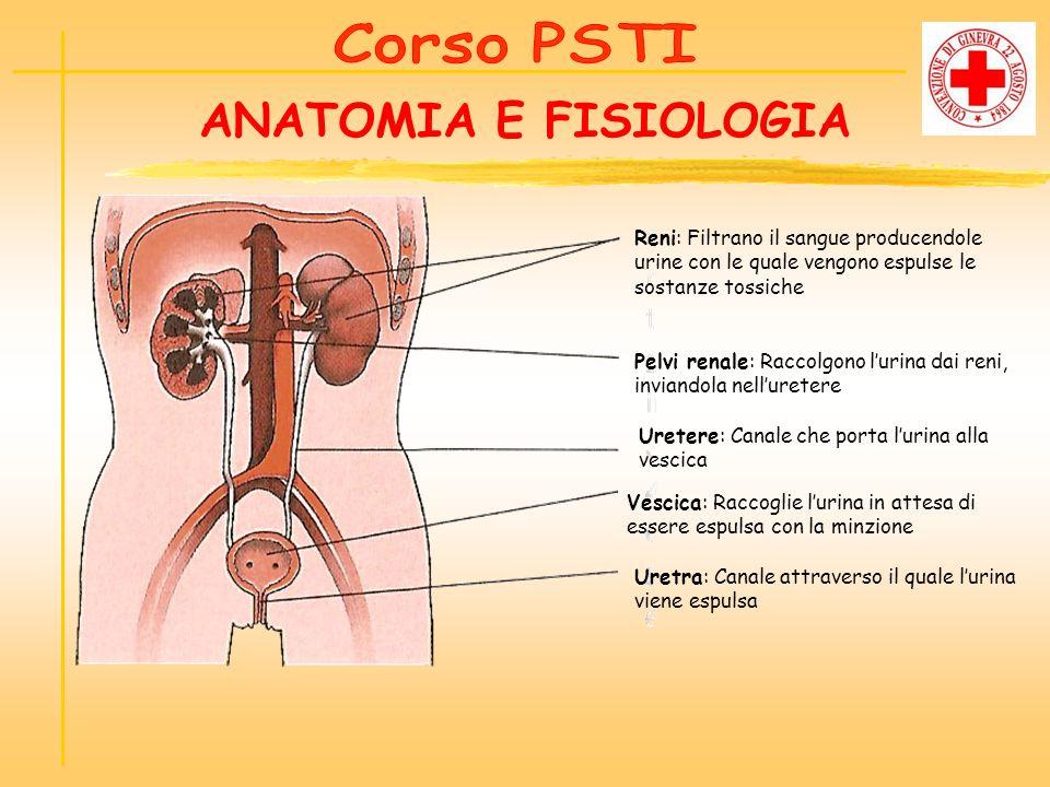ANATOMIA E FISIOLOGIA Reni: Filtrano il sangue producendole urine con le quale vengono espulse le sostanze tossiche Pelvi renale: Raccolgono lurina da
