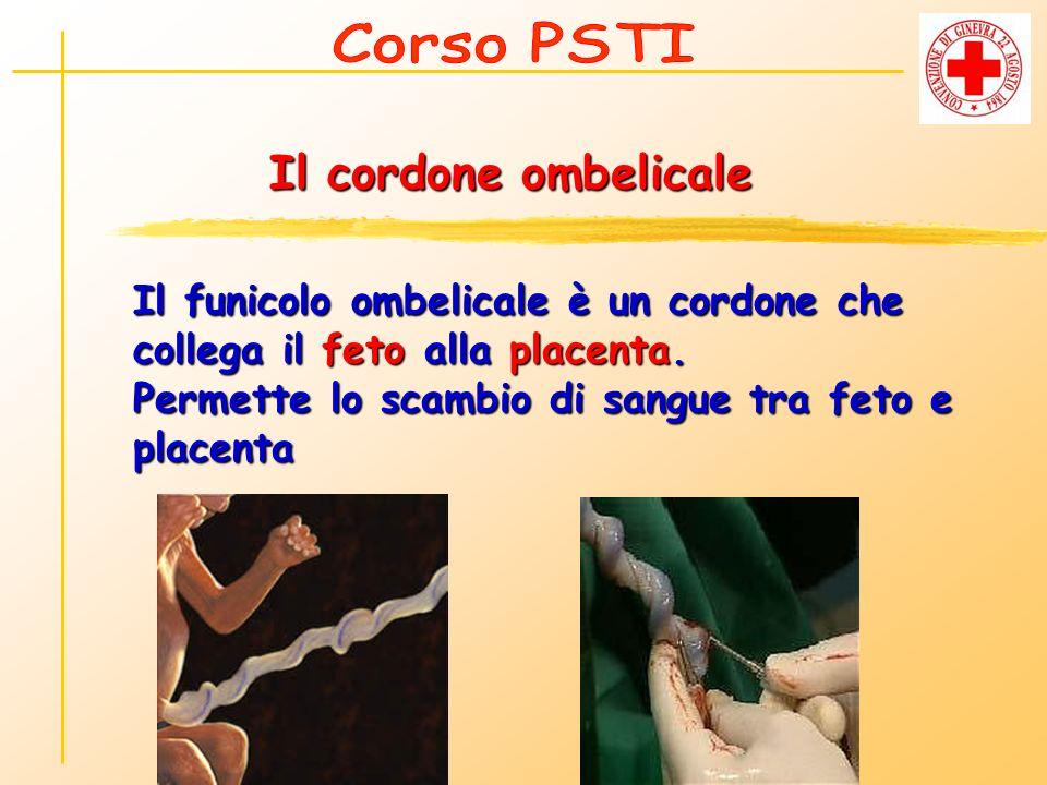 Il cordone ombelicale Il funicolo ombelicale è un cordone che collega il feto alla placenta. Permette lo scambio di sangue tra feto e placenta