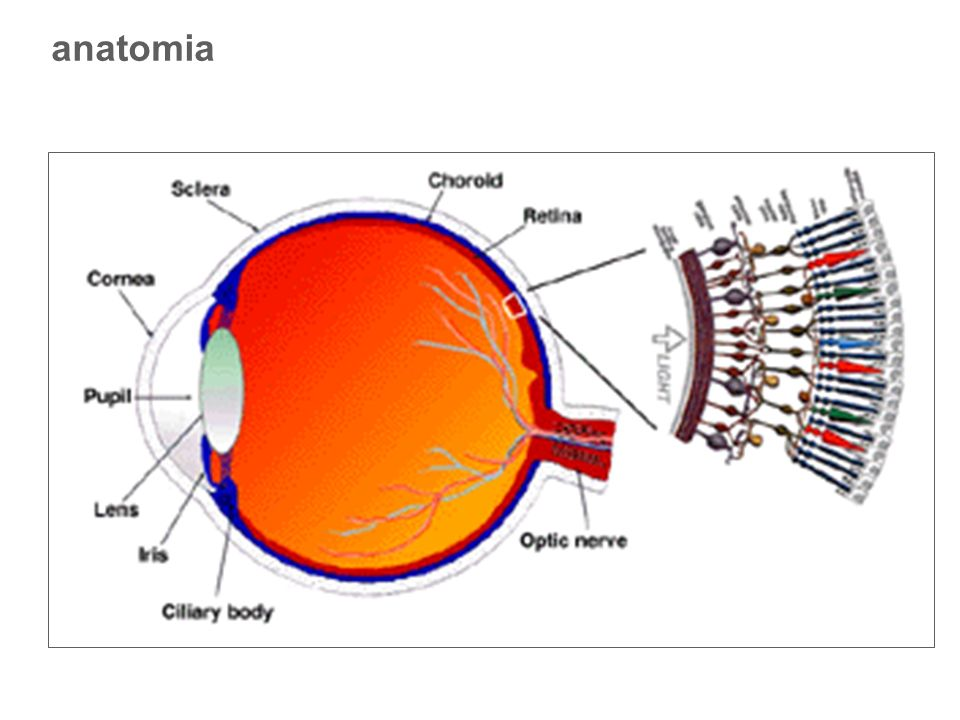 parametri di stimolazione 2 Dimensione campo globale di stimolo: Almeno 8° Angolo visivo dei singoli elementi: Angoli visivi <15 più adatti alla stimolazione della fovea Angoli visivi >40 più adatti a stimolazione reg.