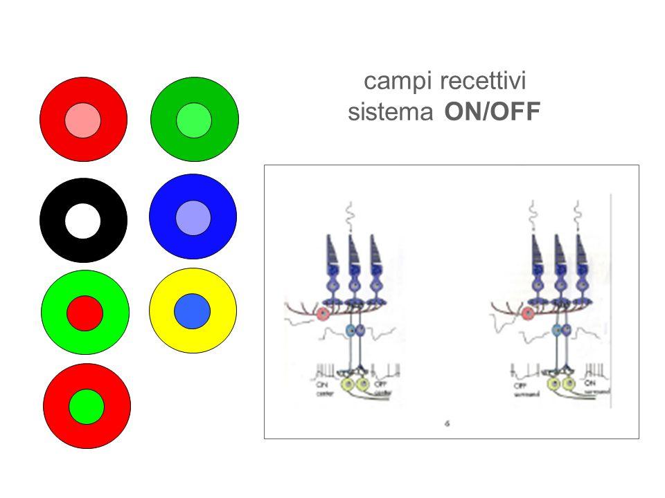 PEV da flash Breve flash di luce prodotto da una lampada allo xenon di uno stroboscopio Lintensità del flash è di 3 cd/m2, ogni flash una durata massima di 5 msec Il fotostimolatore deve sottendere un angolo visivo di almeno 20° Colore dello stimolo Frequenza dello stimolo Stimolazione monoculare o binoculare.
