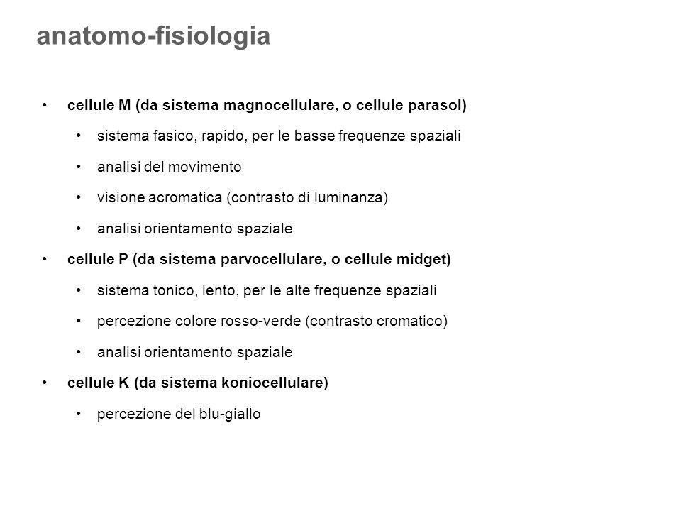 cellule M (da sistema magnocellulare, o cellule parasol) sistema fasico, rapido, per le basse frequenze spaziali analisi del movimento visione acromat
