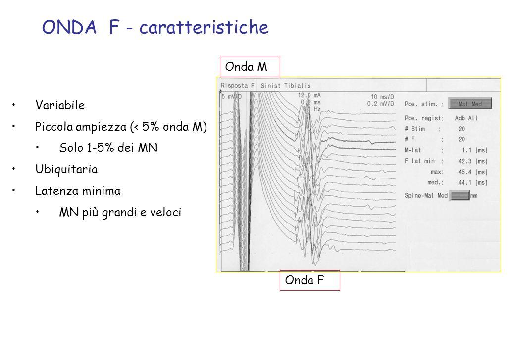 ONDA F - caratteristiche Variabile Piccola ampiezza (< 5% onda M) Solo 1-5% dei MN Ubiquitaria Latenza minima MN più grandi e veloci Onda M Onda F