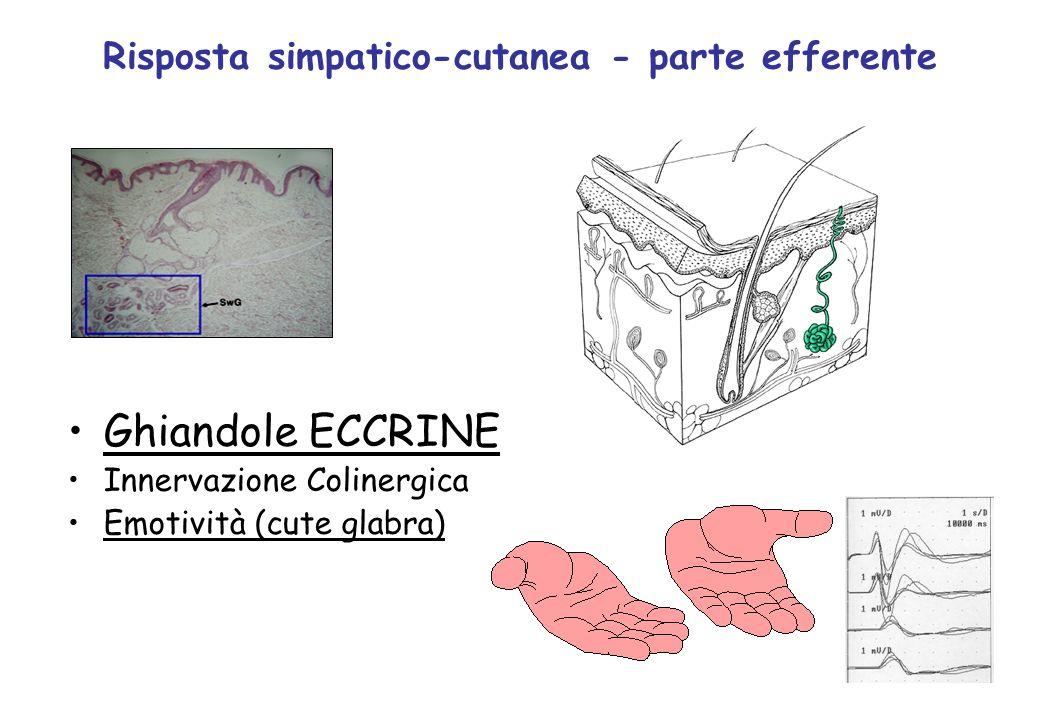 Ghiandole ECCRINE Innervazione Colinergica Emotività (cute glabra) Risposta simpatico-cutanea - parte efferente