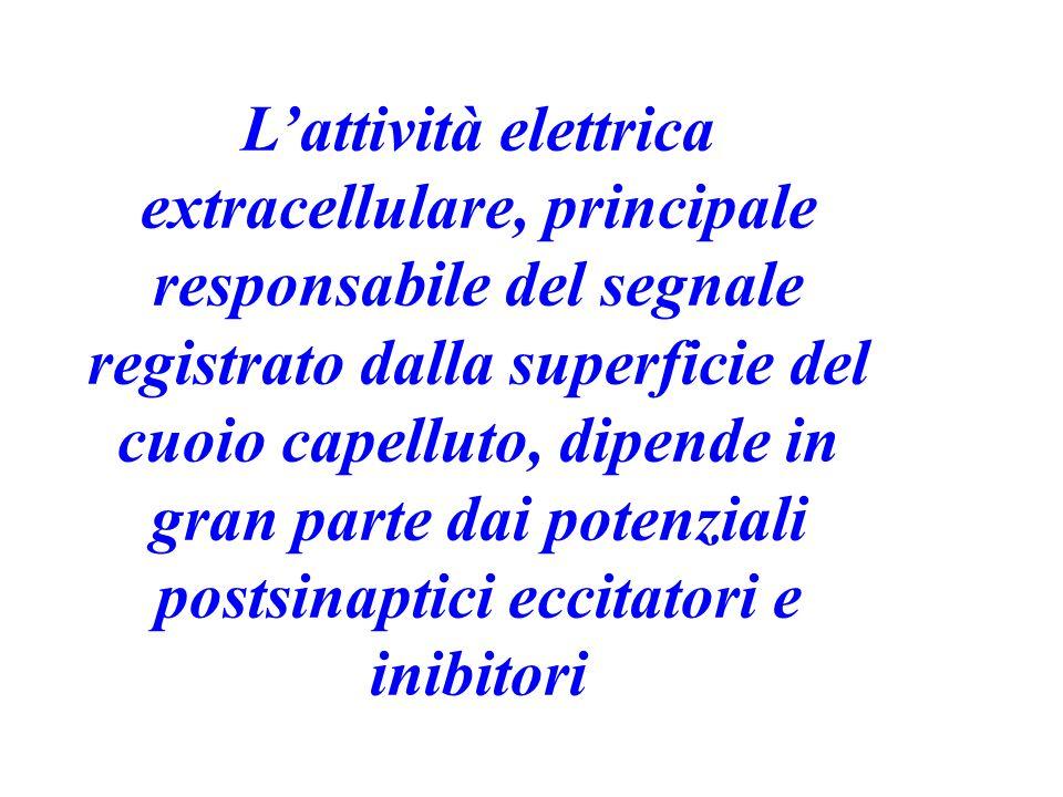 Lattività elettrica extracellulare, principale responsabile del segnale registrato dalla superficie del cuoio capelluto, dipende in gran parte dai pot