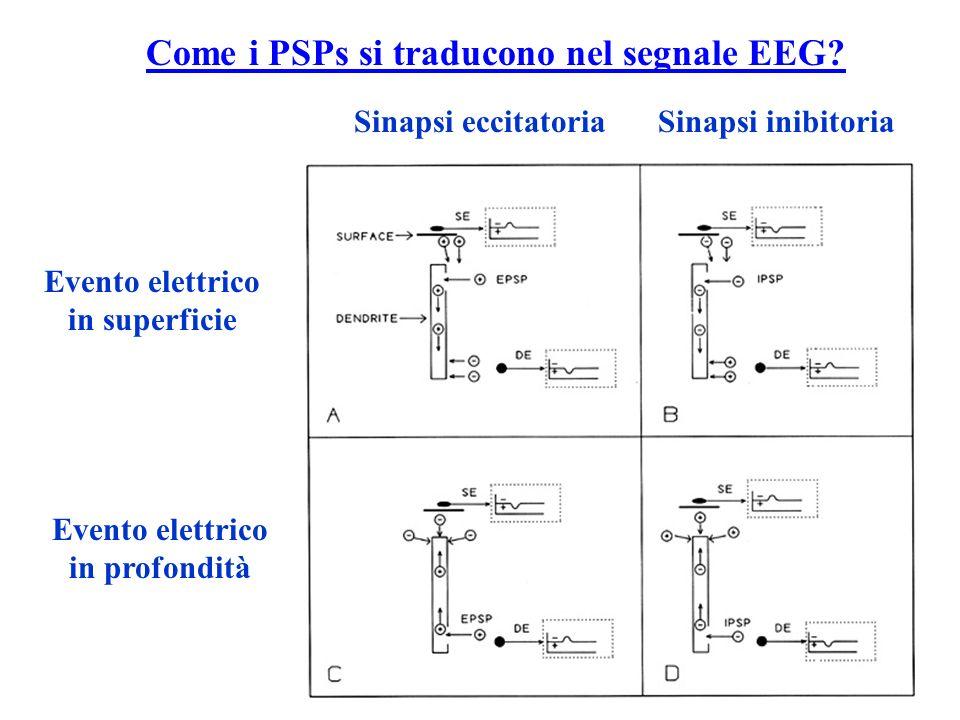 Come i PSPs si traducono nel segnale EEG? Sinapsi eccitatoriaSinapsi inibitoria Evento elettrico in superficie Evento elettrico in profondità