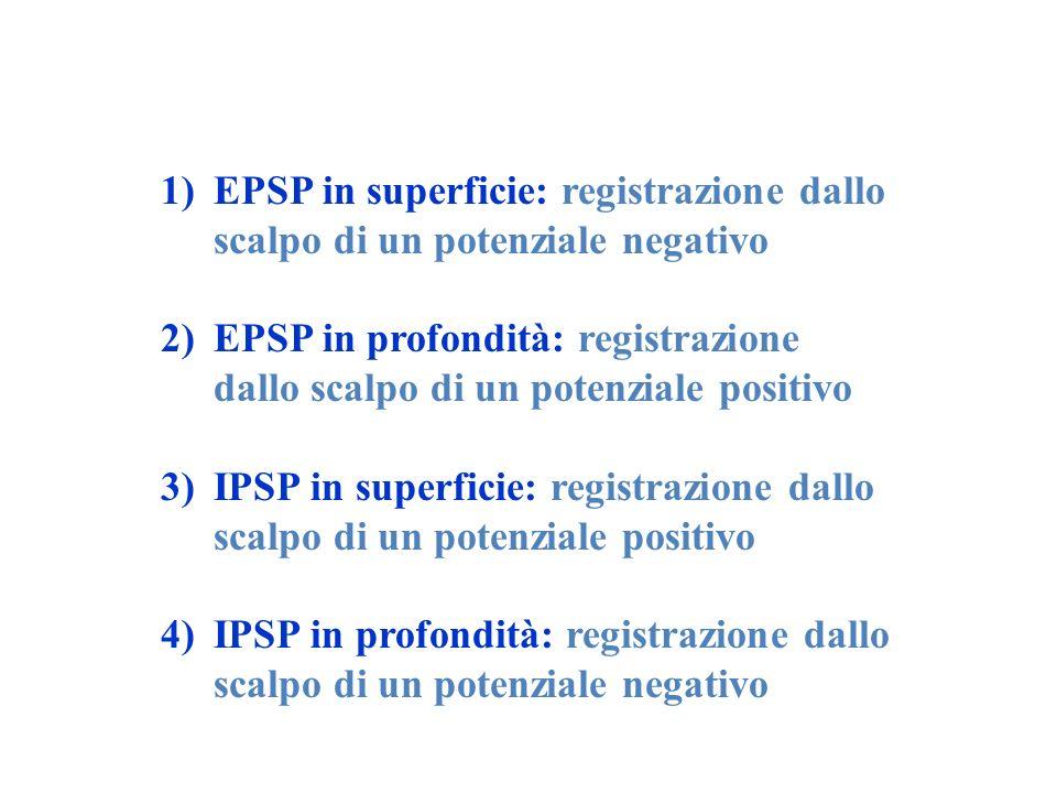 1)EPSP in superficie: registrazione dallo scalpo di un potenziale negativo 2)EPSP in profondità: registrazione dallo scalpo di un potenziale positivo