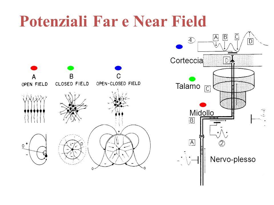 Nervo-plesso Midollo Talamo Corteccia Potenziali Far e Near Field